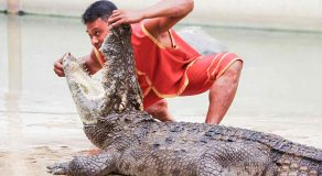 Crocodile Farm and Zoo Tour at Samutprakarn Bangkok Tour