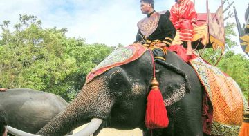 Elephant Theme Show & Crocodile Farm at Samphran Tour