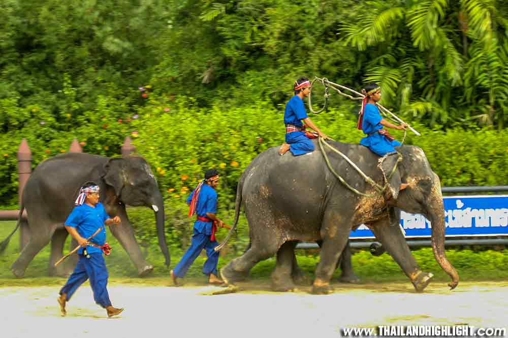 Damnoen Saduak Floating Market and Elephant Theme Show Crocodile Farm Samphran