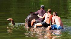 Kanchanaburi Elephant Bathing Tour from Bangkok
