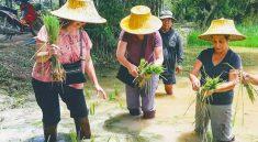 Thai Touch Tour Nakhon Nayok Ox Cart Riding Trip