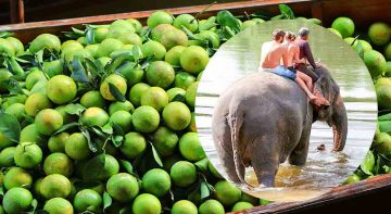 Kanchanaburi Elephant Bathing Erawan fall Tour 2 Days 1 Night