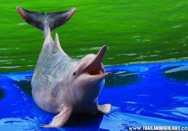 Dolphin World Pattaya Tour Booking Ticket Price Discount Promotion