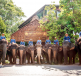 Elephant Village Tour Pattaya