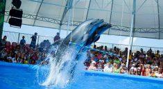 Pattaya Dolphinarium New Dolphin Show in Pattaya