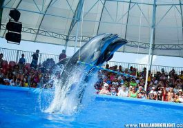 Pattaya Dolphinarium New Dolphin Show in Pattaya