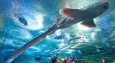 Underwater World Pattaya Tour