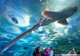 Underwater World Pattaya Tour
