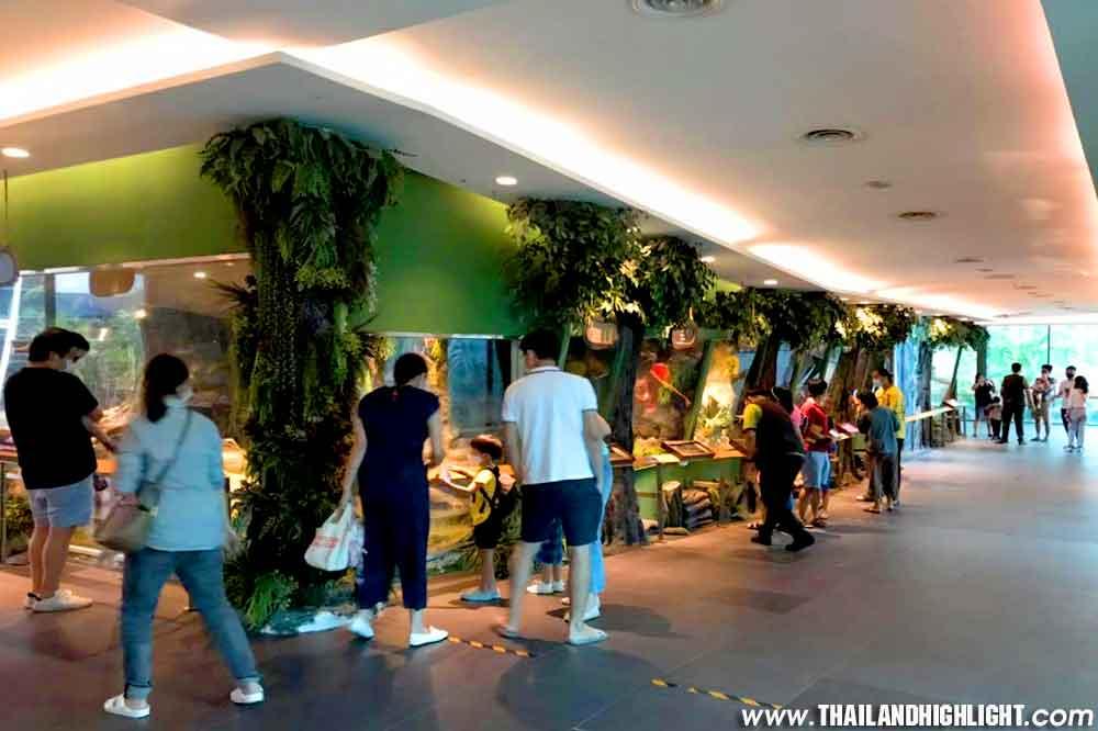 Great Snake Show Bangkok Siam Serpentarium Ticket Discount Booking. Enjoy to see snake museum with snake farm and naga theatre at Siam Serpentarium Bangkok