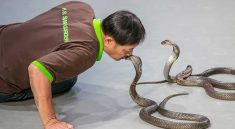 Great Snake Show Bangkok Siam Serpentarium Ticket Discount Booking. Enjoy to see snake museum with snake farm and naga theatre at Siam Serpentarium Bangkok